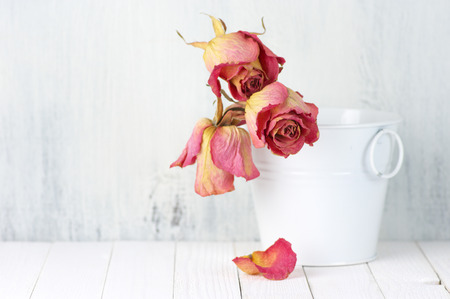 pastel colors: Dried pink roses in white bucket on rustic wooden background. Shallow DOF, focus on front rose. Stock Photo