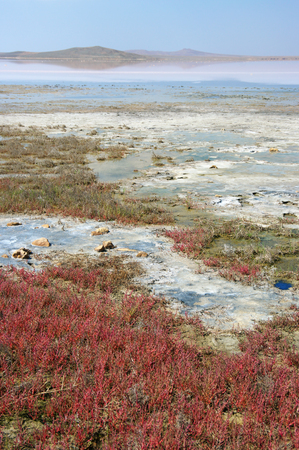 crystallized: Unusual pink Koyashskoye salt lake with crystallized salt and red saltwort on foreground. Crimea.