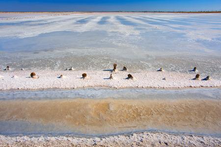 wood abandoned: Abandoned old bay salt works with pink salt and weathered wood pegs. Sasyk-Sivash lake, Crimea.