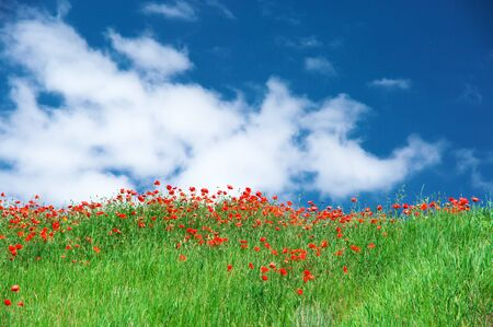 Blooming meadow with green grass and red poppies against blue sky with clouds.