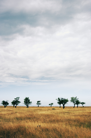 Sparse trees in dried prairie against cloudy sky. Stock Photo