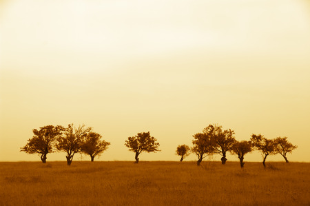 Sparse trees in dried prairie against cloudy sky. Warm filtered image.