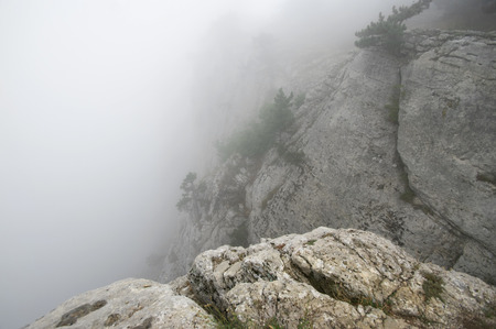 Small pine on cliff in dense fog.
