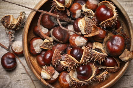 Heap of fresh horse chestnuts in bowl close-up on rustic wooden background. Top view point. Stock Photo
