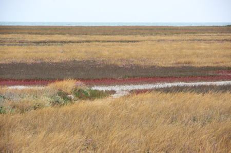Scorched coastal prairie on saline earth.