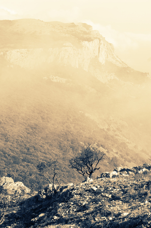Single naked tree on brink of rock against mountain in fog. Filtered toned image.