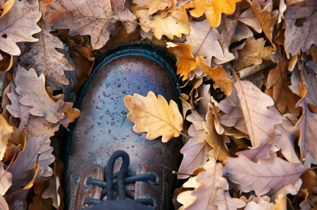 Foot in waterproof leather hiking boot with water drops on falled oak leaves. Autumn travel concept. Top view. Imagens
