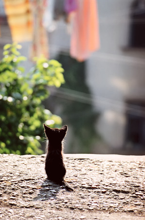 Back view of cute little black kitten sitting on ground in town street at sunny day. Film scan, grainy image. Imagens