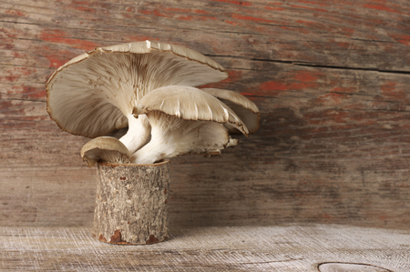 Oyster mushrooms group against wooden background. Stock Photo - 123221748