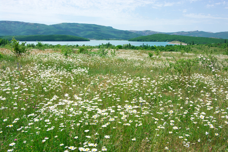Spring meadow with blooming chamomiles against lake and hills. Stock Photo