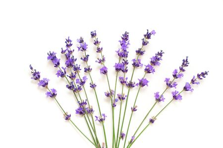 Bunch of lavender flowers partially isolated on white background. Imagens