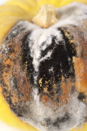Close-up of rot and mold on pumpkin.