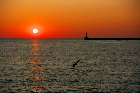 Low sun with reflection in water, seagull and silhouette of lighthouse against red sky. Sea shore landscape at sunset.