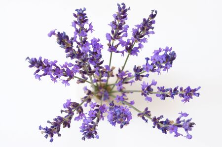 Bunch of lavender flowers in vase on white background. Top view, soft focus.