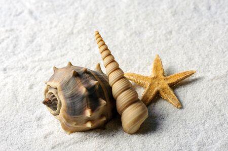 Summer background with shells. Shells and starfish macro. Copy space. 版權商用圖片