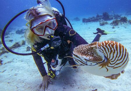 The diver-girl and the nautilus near Panglao Island