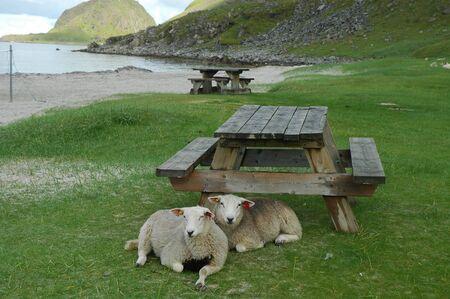 Norway fjord  Lofoten scenic photo