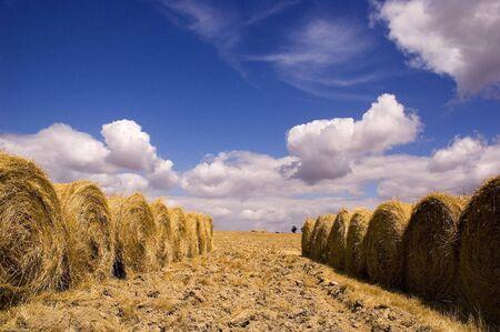 alentejo: Harvest time in Alentejo