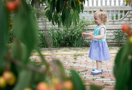 Little girl walking in the cherry garden at the grandmother.