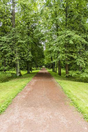 park path: Beautiful park path