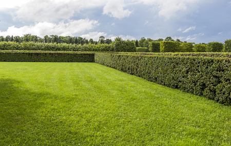 trimmed: Beautifully manicured garden bushes Stock Photo