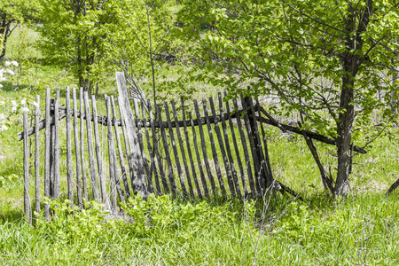 behind the scenes: Ruined wooden rural fence in the forest