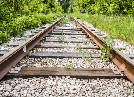 forest railroad: Old abandoned railroad goes away into the distance through a thick forest