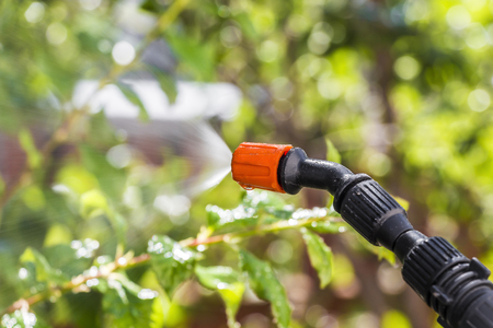 insecticidal: Spraying the leaves of trees against pests with chemicals Stock Photo