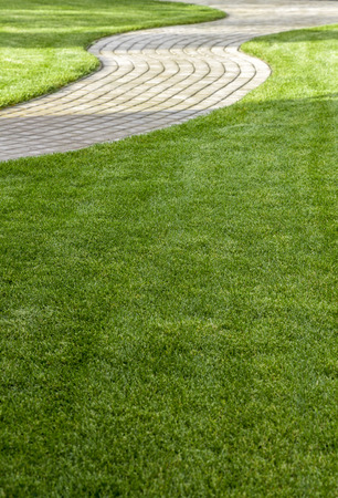 Evenly trimmed lawn grass in the backyard.
