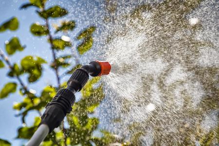 화학 물질로 해충으로부터 나무 잎을 뿌리는 것. 스톡 콘텐츠