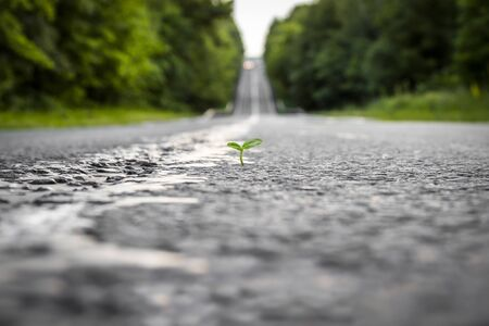 A small sprout made its way through the asphalt of a country road.