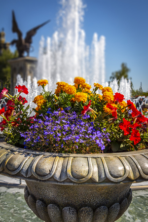 Bright decorative flower bed in a public park.