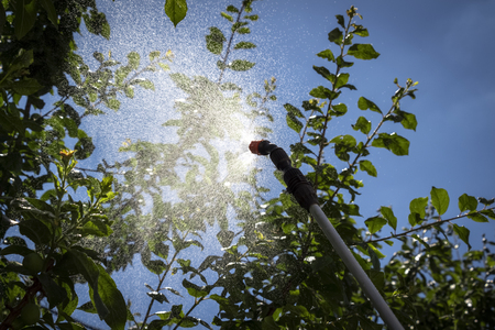Chemical treatment of garden trees from insects.