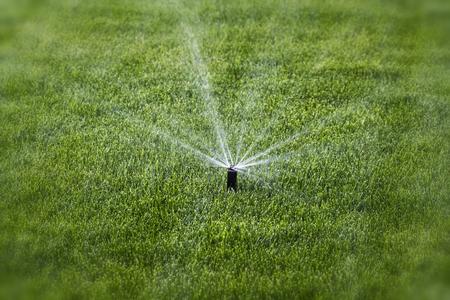 Rozpryski wody podczas podlewania w tle zielonej trawy. Zdjęcie Seryjne