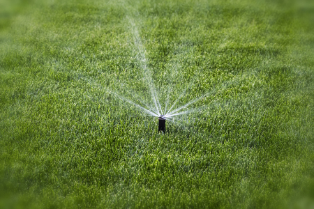 Splashes of water during watering in the background of green grass. Stockfoto