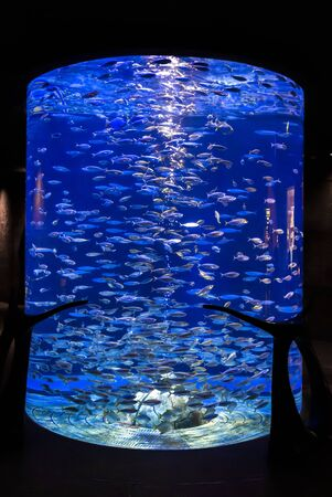 A lot of fish in a large decorative aquarium.