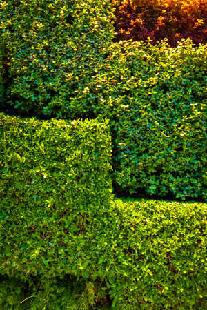 Artificial decoration of the outer wall of the building from green live bushes.