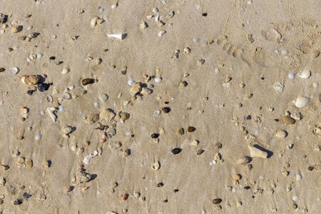 Small shells and pebbles on a sandy beach.
