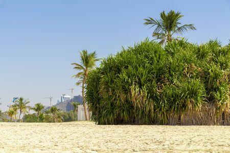 Palm trees on a deserted city beach.