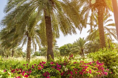 Tall palm trees in the flowered southern garden.