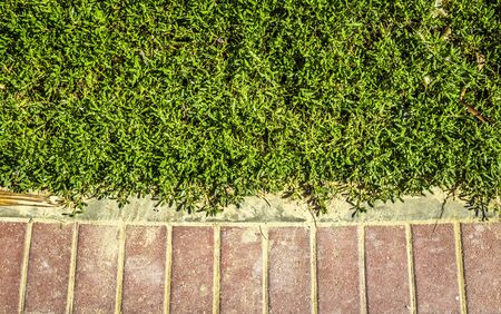 Decorative neatly trimmed bushes in the park along the cobblestone pavement. Stockfoto