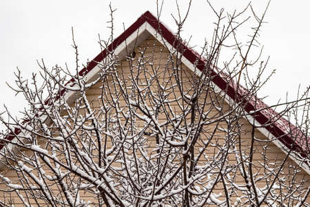 Fresh fluffy snow on tree branches on a quiet winter day against the background of the facade of a private house.