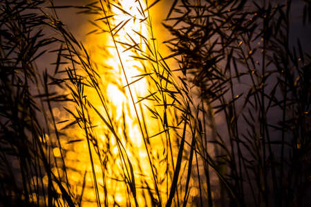 Grass against the setting sun and the surface of the sea.