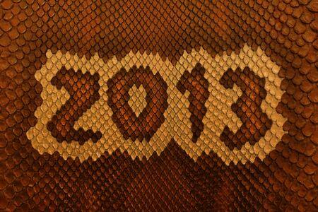 Snake skin 2013