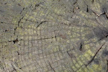 Textura staré dřevěné pozadí přírody Reklamní fotografie