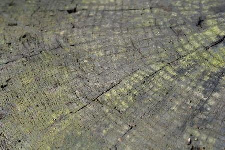 Textura z tmavého dřeva přírodní pozadí