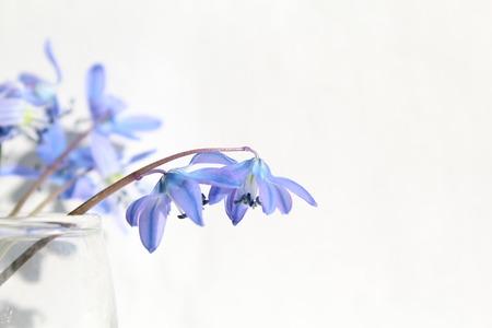 Krásné modré jarní květiny