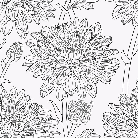 Floral seamless hand drawn vector background with chrysanthemums in black and white colors.. Illustration