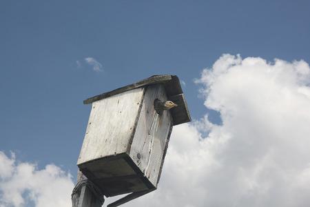 fledgling: Fledgling starlings sitting in waiting birdhouse feeding Stock Photo