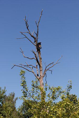albero secco: Solitario Birdhouse vuoto su albero secco sullo sfondo del cielo blu